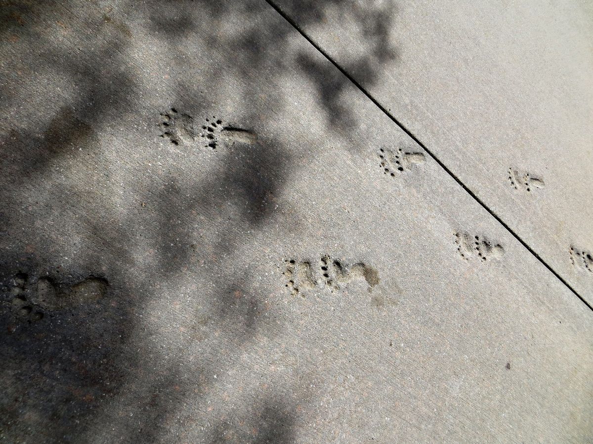 Follow the footsteps!