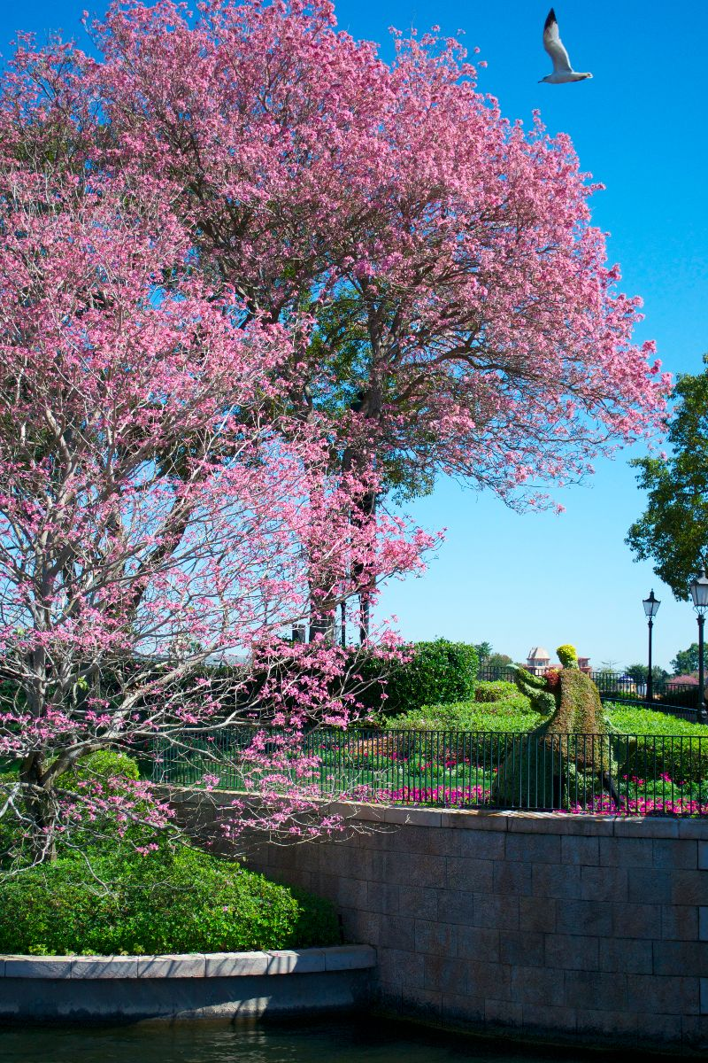 The Aurora and Phillip topiary dances under a gorgeous blooming tree near the France pavilion