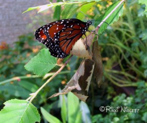 Tinker Bell's Butterfly House
