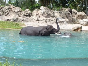 This is the only time I've seen elephants bathe in the sun!