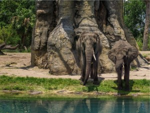 Elephants Relax by the Water