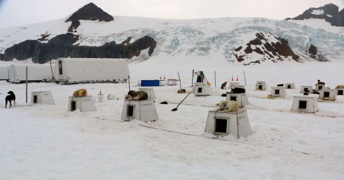 Dog houses and trainer tents.