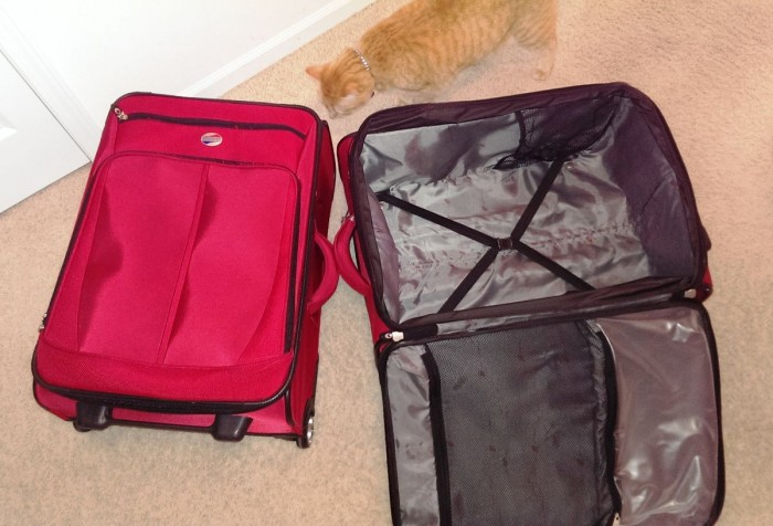 Ultra light and ultra large are the key features of this luggage.* *Adorable cat not included
