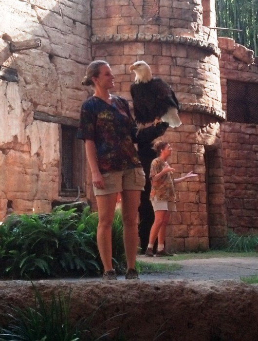 Flights of Wonder is a fun and educational show about birds, and can only be seen at certain scheduled times throughout the day.