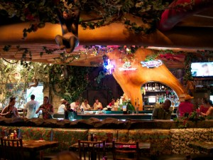 Rainforest Cafe Bar