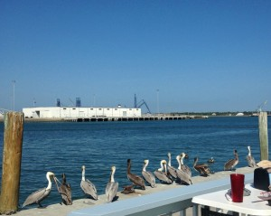 Pelicans stick by the fresh catch at Seafood Atlantic.