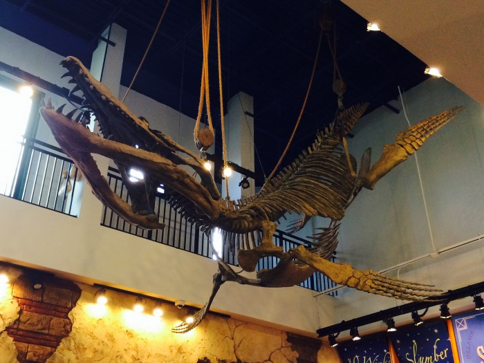 IOA_skeleton_hanging