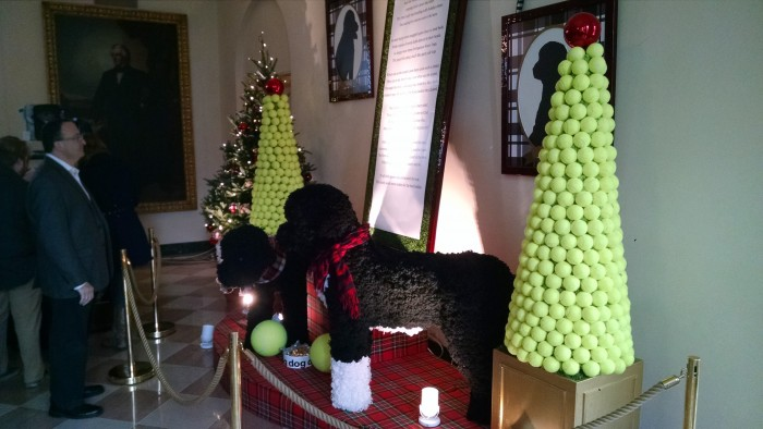 The First Dogs and their tennis ball trees (being admired by your friend and mine, Len Testa)