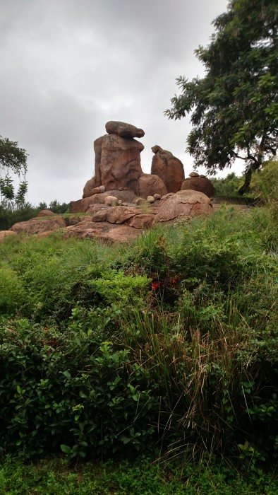 The male lion perched on his rock