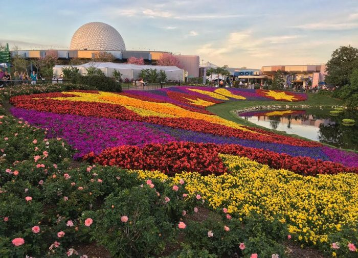 """The iconic """"flower blanket"""" is one of the many favorite views of the Epcot Flower and Garden Festival."""